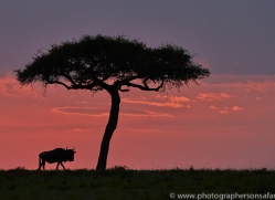 Sunset 2014-2copyright-photographers-on-safari-com