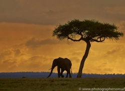 Sunset 2014-3copyright-photographers-on-safari-com