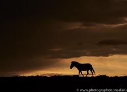 Sunset 2014-4copyright-photographers-on-safari-com