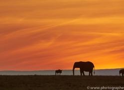 Sunset 2014-5copyright-photographers-on-safari-com