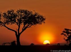 Sunset 2014-7copyright-photographers-on-safari-com