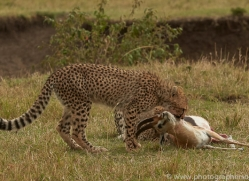 cheetah-copyright-photographers-on-safari-com-7938