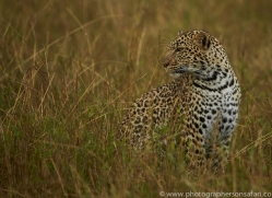 leopard-copyright-photographers-on-safari-com-7950