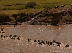 migration-river-crossings-masai-mara-1607-copyright-photographers-on-safari-com