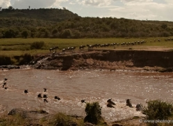 migration-river-crossings-masai-mara-1609-copyright-photographers-on-safari-com