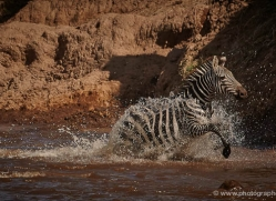 migration-river-crossings-masai-mara-1612-copyright-photographers-on-safari-com