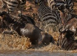 migration-river-crossings-masai-mara-1614-copyright-photographers-on-safari-com