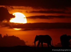 sunrise-masai-mara-1652-copyright-photographers-on-safari-com