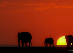 sunrise-masai-mara-1654-copyright-photographers-on-safari-com