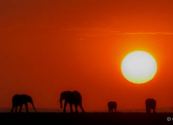 sunrise-masai-mara-1655-copyright-photographers-on-safari-com