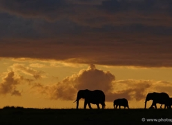 sunset-masai-mara-1656-copyright-photographers-on-safari-com