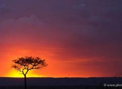 sunset-masai-mara-1658-copyright-photographers-on-safari-com