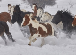 wild-west-horse-roundup-copyright-photographers-on-safari-com-7667