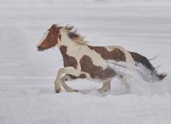 wild-west-horse-roundup-copyright-photographers-on-safari-com-7671