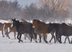 wild-west-horse-roundup-copyright-photographers-on-safari-com-7673