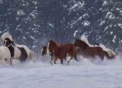 wild-west-horse-roundup-copyright-photographers-on-safari-com-7681
