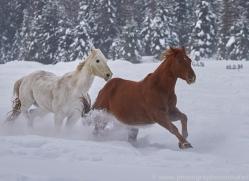 wild-west-horse-roundup-copyright-photographers-on-safari-com-7685