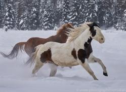 wild-west-horse-roundup-copyright-photographers-on-safari-com-7686