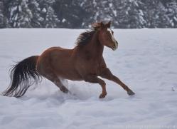 wild-west-horse-roundup-copyright-photographers-on-safari-com-7687