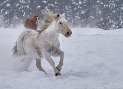 wild-west-horse-roundup-copyright-photographers-on-safari-com-7690