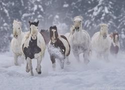 wild-west-horse-roundup-copyright-photographers-on-safari-com-7692