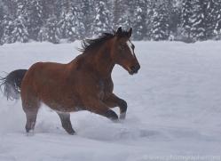 wild-west-horse-roundup-copyright-photographers-on-safari-com-7693