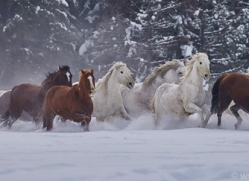 wild-west-horse-roundup-copyright-photographers-on-safari-com-7697
