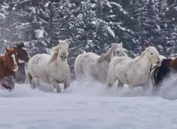 wild-west-horse-roundup-copyright-photographers-on-safari-com-7698