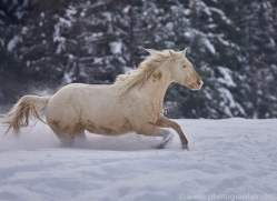 wild-west-horse-roundup-copyright-photographers-on-safari-com-7699
