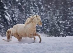 wild-west-horse-roundup-copyright-photographers-on-safari-com-7700