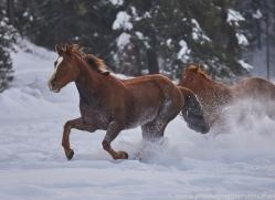 wild-west-horse-roundup-copyright-photographers-on-safari-com-7706