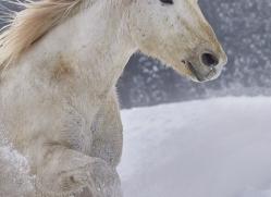 wild-west-horse-roundup-copyright-photographers-on-safari-com-7707