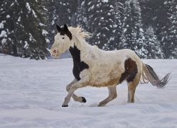 wild-west-horse-roundup-copyright-photographers-on-safari-com-7708