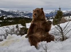 Grizzly Bear 2014-3copyright-photographers-on-safari-com