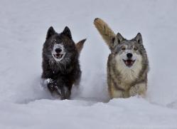 Wolf 2014-12copyright-photographers-on-safari-com