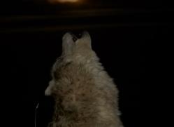 Wolf 2014-5copyright-photographers-on-safari-com