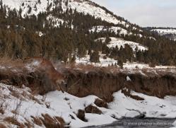 mountain-lion-puma-3526-montana-copyright-photographers-on-safari-com
