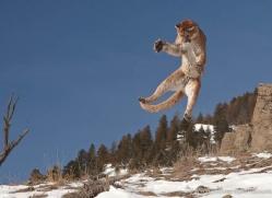 mountain-lion-puma-3552-montana-copyright-photographers-on-safari-com