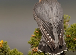 merlin-085-northumberland-copyright-photographers-on-safari-com