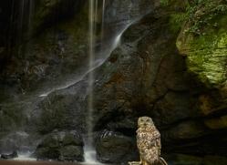 Eagle Owl 2014-2copyright-photographers-on-safari-com
