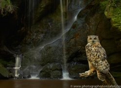 Eagle Owl 2014-4copyright-photographers-on-safari-com