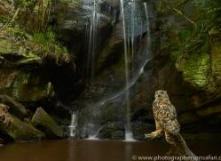 Eagle Owl 2014-5copyright-photographers-on-safari-com