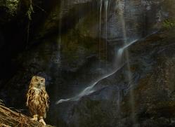Eagle Owl 2014-6copyright-photographers-on-safari-com