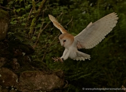 barn-owl-4161-northumberland-copyright-photographers-on-safari-com
