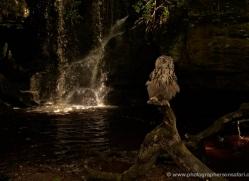 european-eagle-owl-4100-northumberland-copyright-photographers-on-safari-com