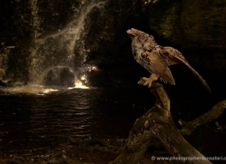 european-eagle-owl-4102-northumberland-copyright-photographers-on-safari-com