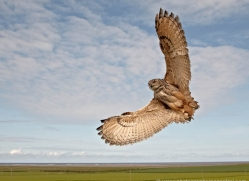 european-eagle-owl-4103-northumberland-copyright-photographers-on-safari-com
