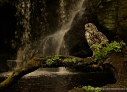 european-eagle-owl-4104-northumberland-copyright-photographers-on-safari-com