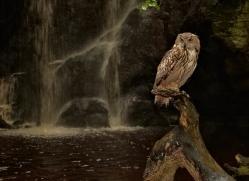 european-eagle-owl-4107-northumberland-copyright-photographers-on-safari-com