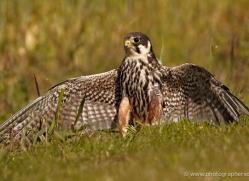 hobby-4187-northumberland-copyright-photographers-on-safari-com